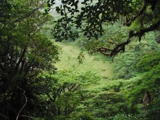 w dżungli_in the jungle
