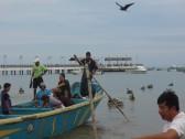 rybi targ_fish market
